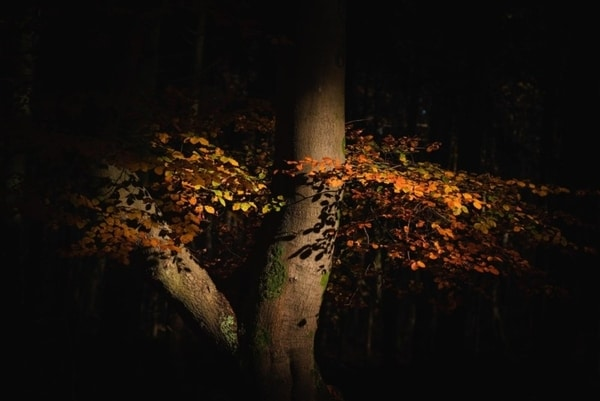 نوردهی در عکاسی پاییز