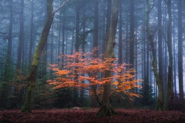 مه در عکاسی پاییز