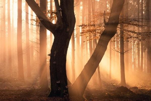نور در عکاسی فصل پاییز